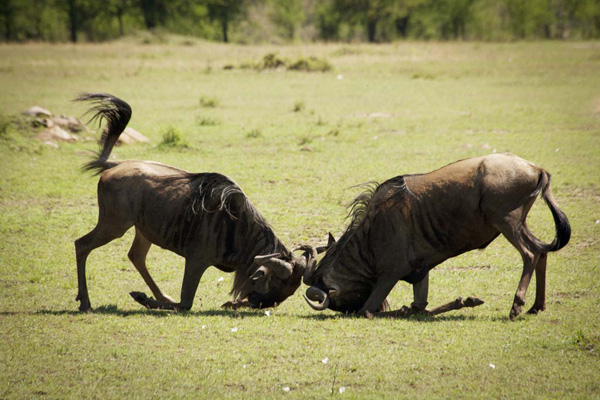 Lamai Serengeti Safari Lodge 3