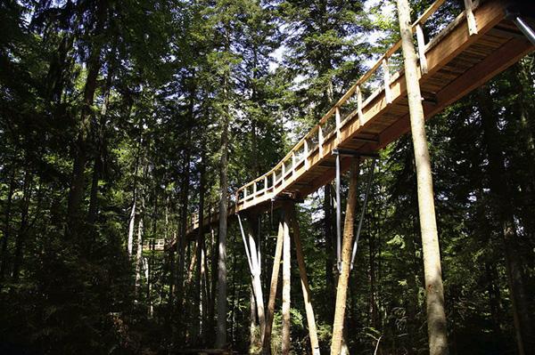 Tree Top Walkway – Bavarian Forest 11