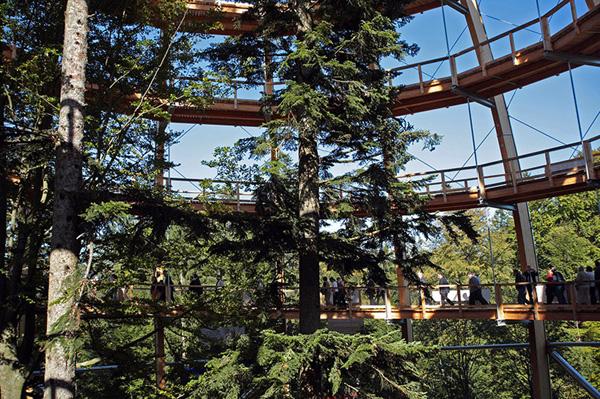 Tree Top Walkway – Bavarian Forest 3