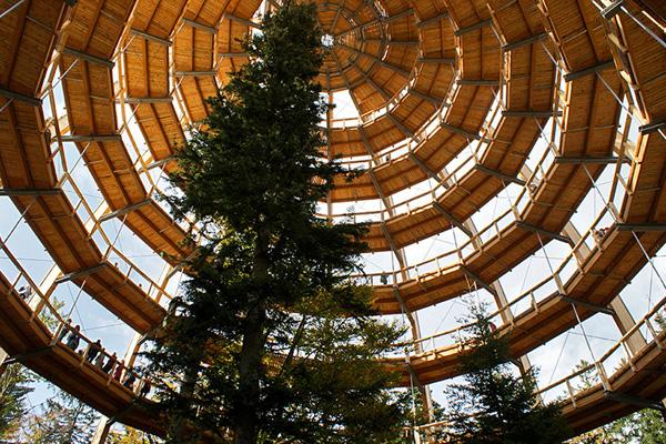 Tree Top Walkway – Bavarian Forest 6