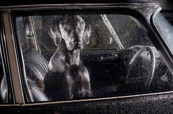 Dogs in Cars by Martin Usborne 4