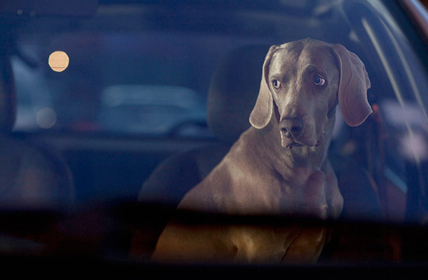 Dogs in Cars by Martin Usborne 5