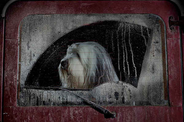 Dogs in Cars by Martin Usborne 6