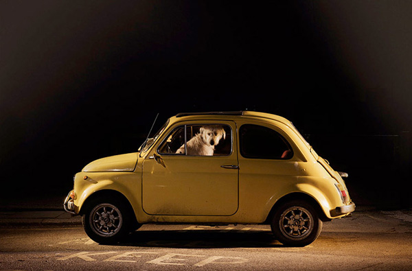 Dogs in Cars by Martin Usborne 7