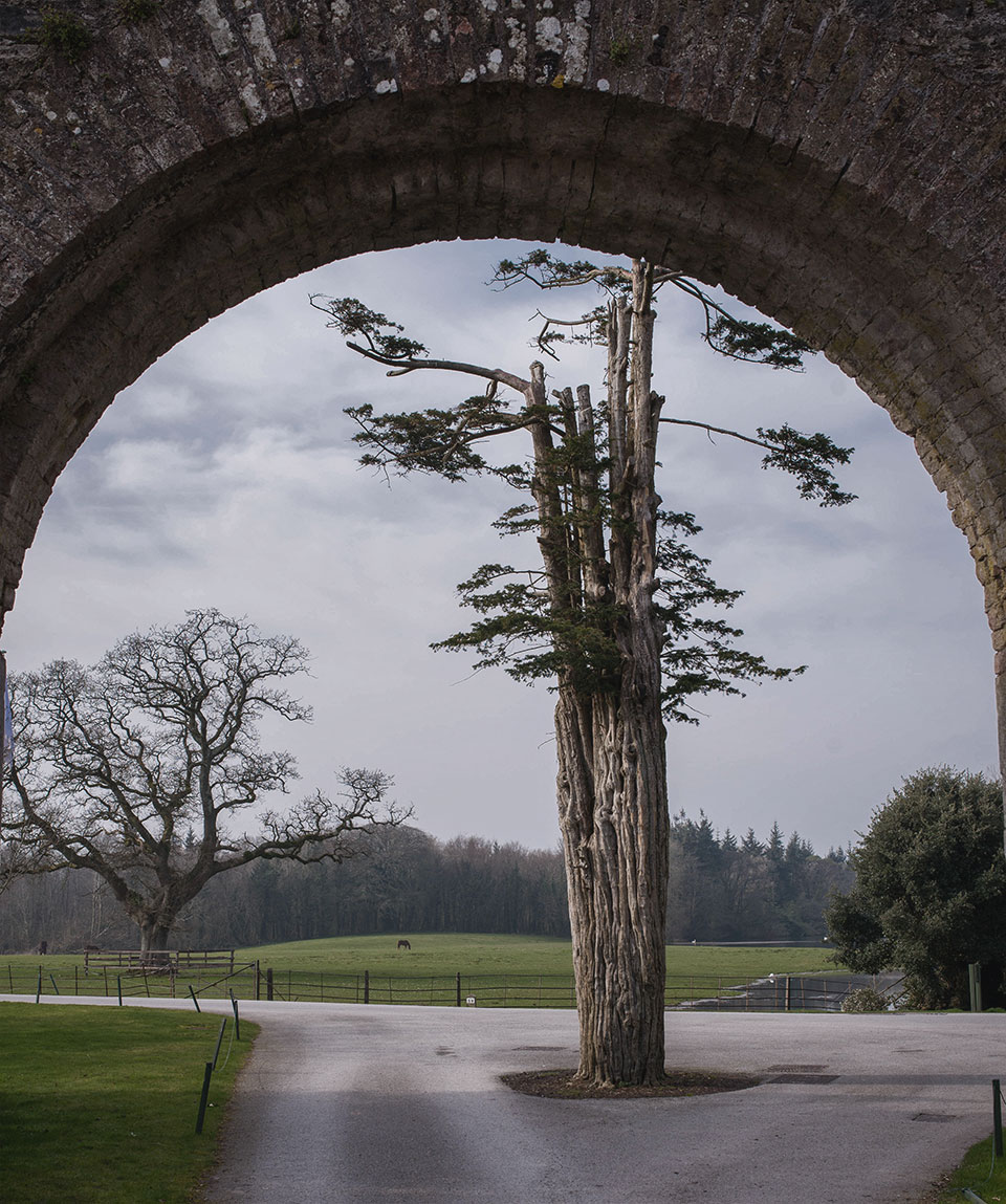 Castlemartyr-Resort—Arch-Framed-View