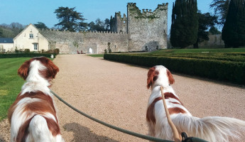 Exploring Ireland in Pictures: Castlemartyr Resort and the Coasts of Cork