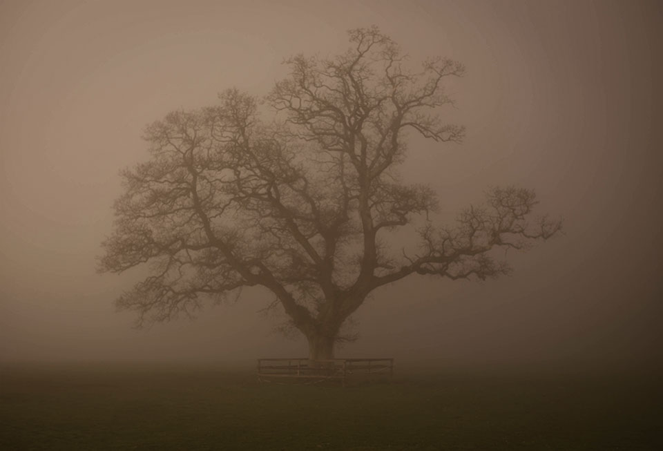 Castlemartyr Resort - Ghost Tree © 2014 - Seamus Payne