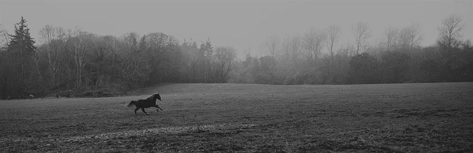 Castlemartyr-Resort—Running-Horses