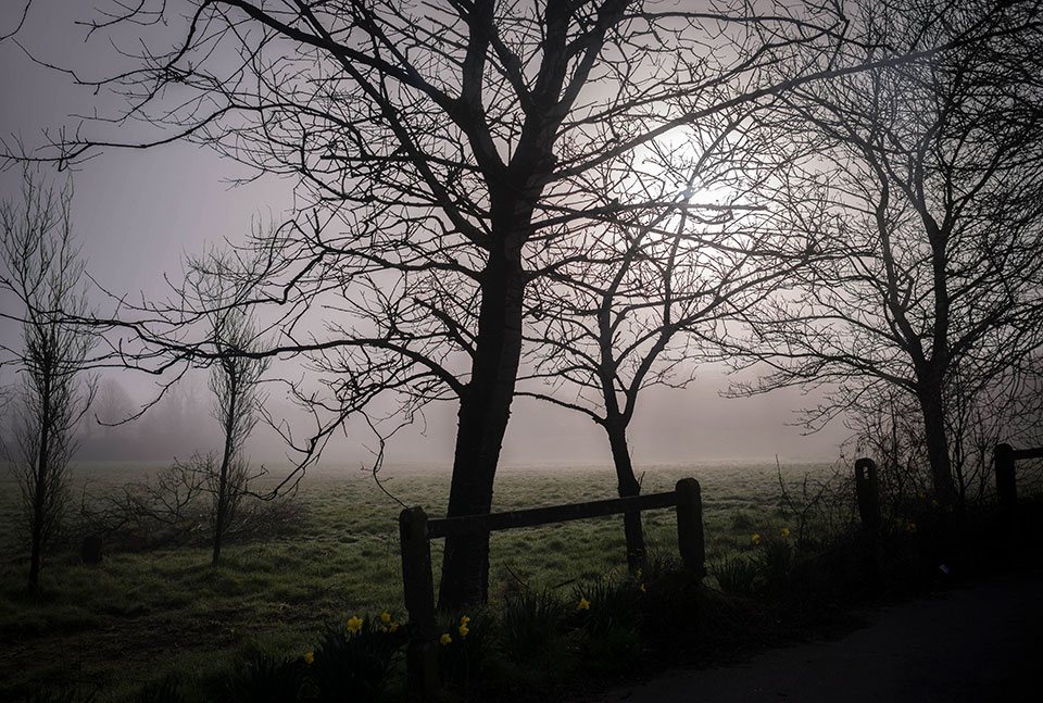 Ride-to-Midleton—Foggy-Fields