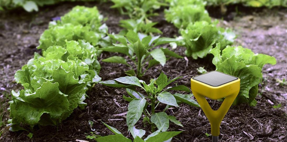 Edyn Smart Garden