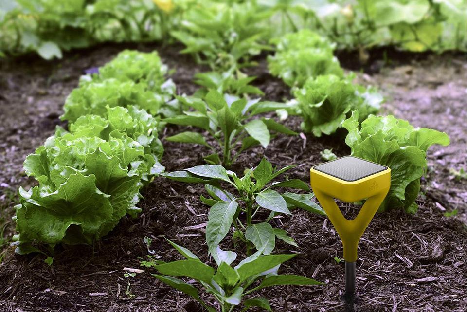 Edyn Smart Garden (3)