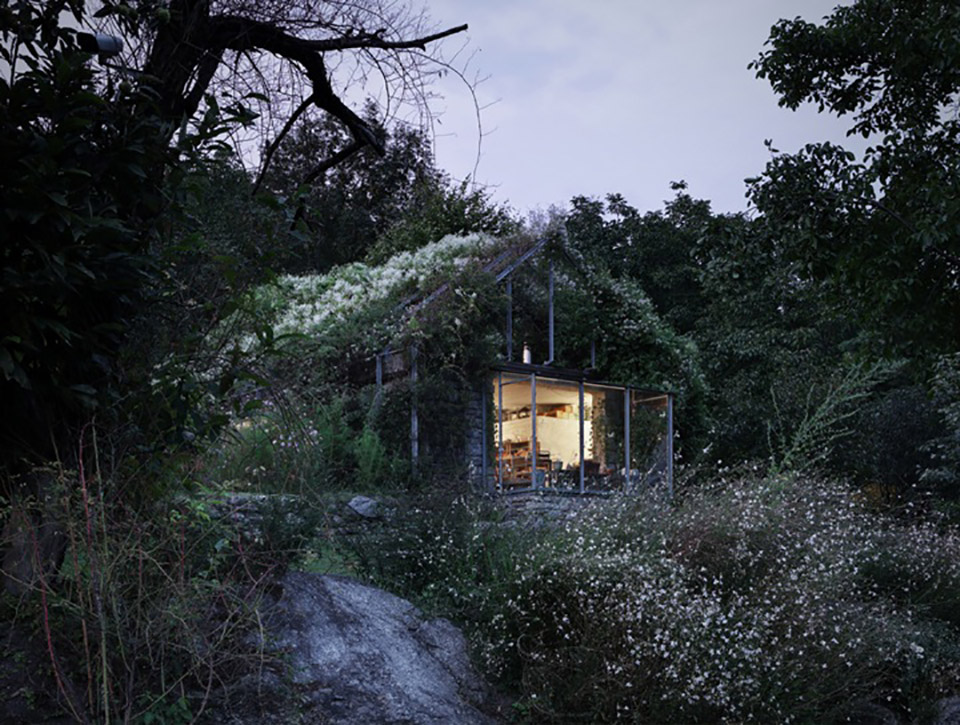 Green Box Overgrown Wilderness Studio 2
