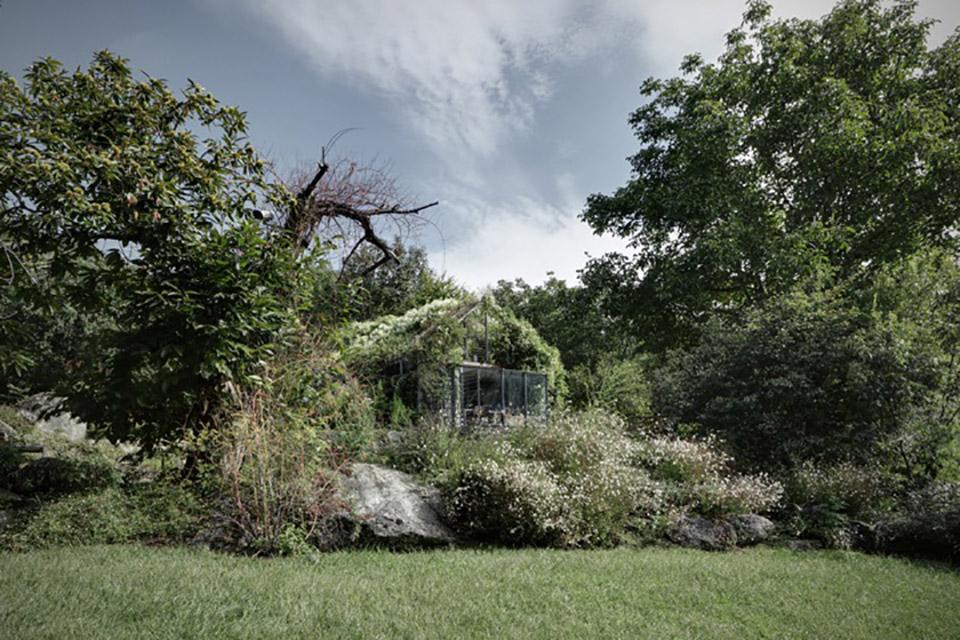 Green Box Overgrown Wilderness Studio 4