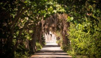Abandoned Beach Forts of Florida - Egmont Key palm tunnel