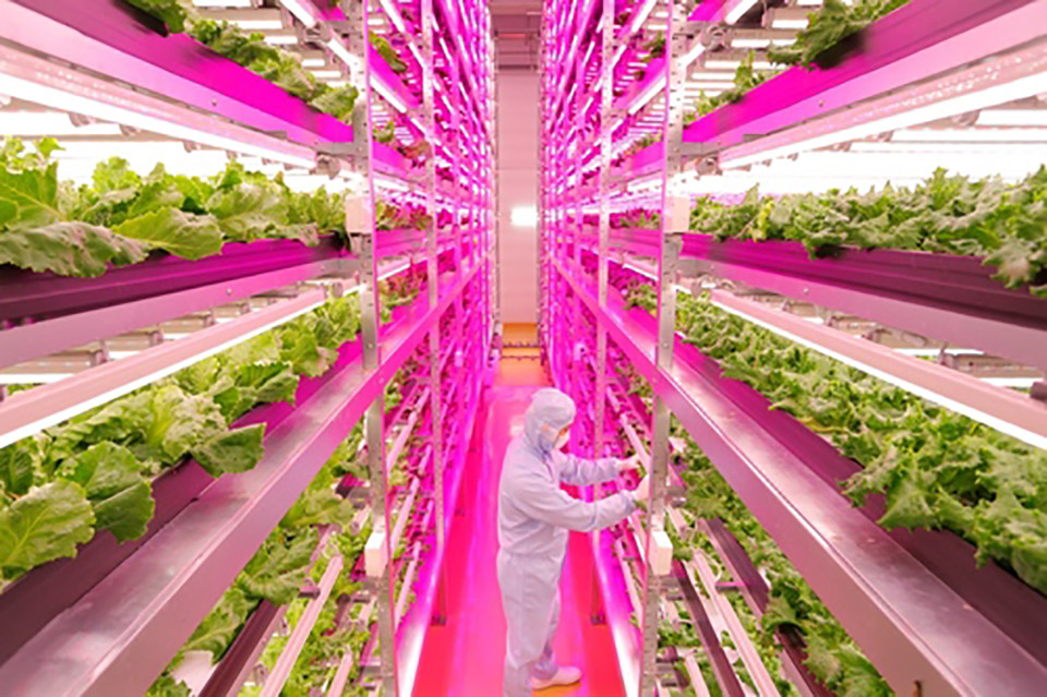 Worlds Largest Indoor Farm 1