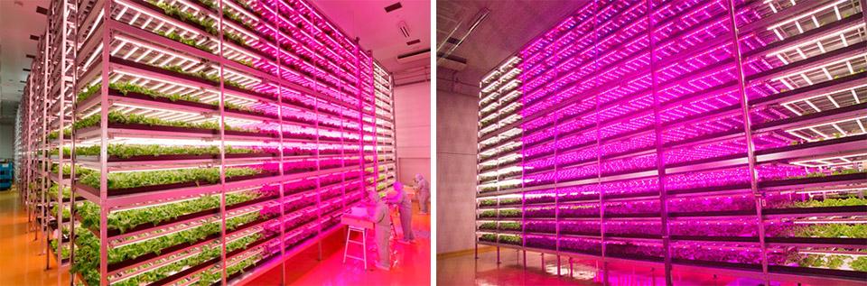 Worlds Largest Indoor Farm 3 collage