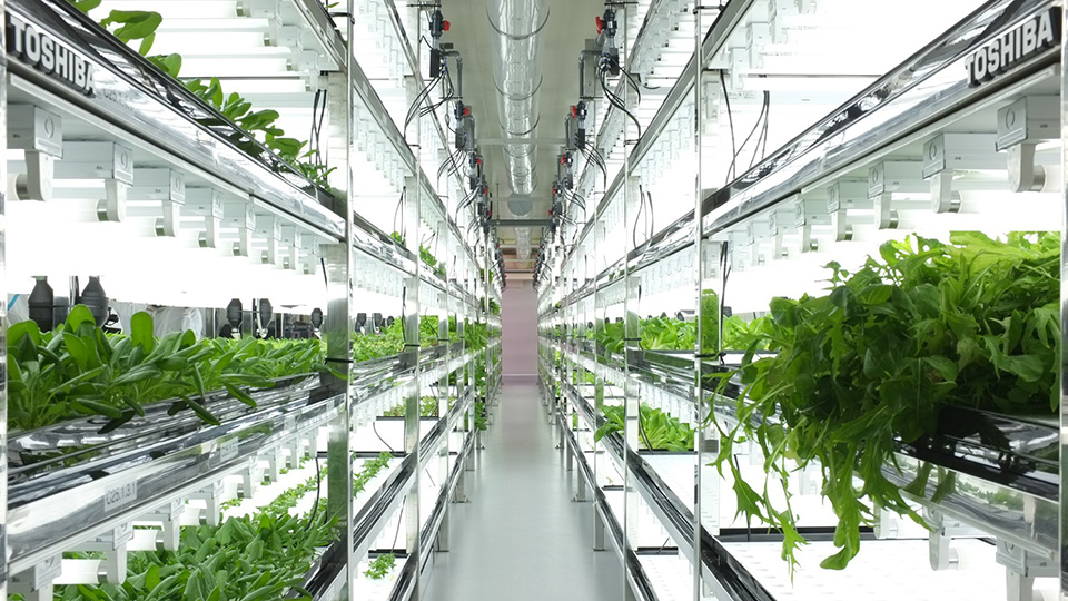 Toshiba Hydroponic Systems Introduces The Urban Farms Of