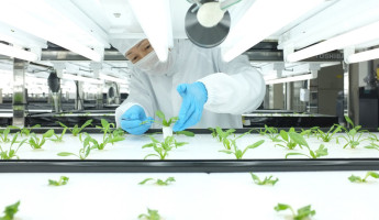 Toshiba Hydroponic Systems - Photo by Dan Frommer of Quartz 2