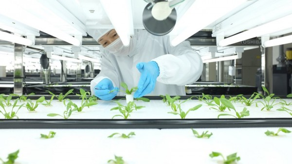 Toshiba Hydroponic Systems Photo by Dan Frommer of Quartz 2 600x337 Toshiba Hydroponic Systems Introduces the Urban Farms of the Future