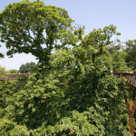 Nature Architecture 2014 - Kew Tree Top Walkway - London - 2