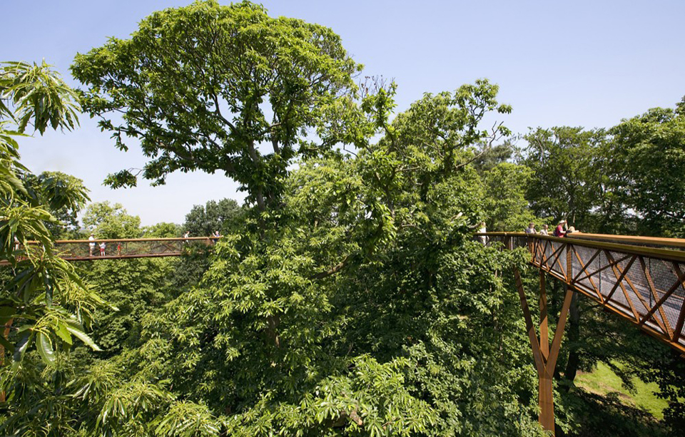 kew-tree-top-walkway-rhizotron-marks-barfield-architects-peter-durant-3
