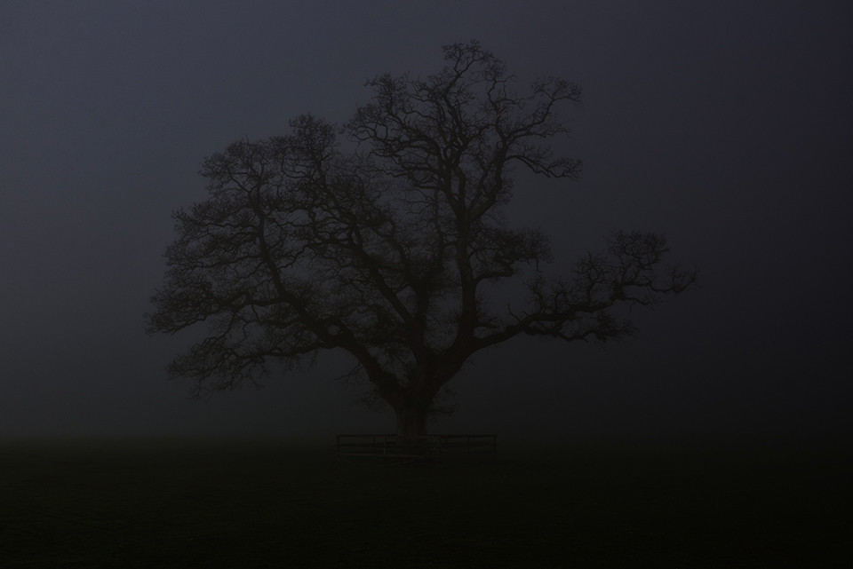 Irish Travel Landscape Photography - Castlemartyr Tree in Fog - © Seamus Payne