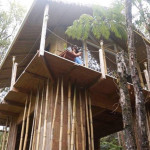 AirBNB TreeHouses - Hawaii Treehouse for Rent 2