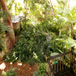 AirBNB TreeHouses - Miami Vacation Rental Treehouse and Organic Farm 3