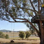 AirBNB TreeHouses - Sonoma Vacation Rental Treehouse 1