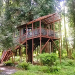 AirBNB TreeHouses - Washington Treehouse for Rent 1