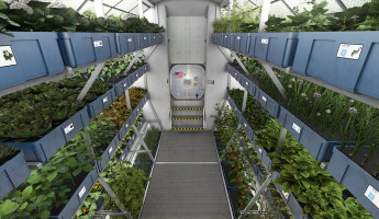 Vegetables Grown in Space - Mars Mission Food Research - 1