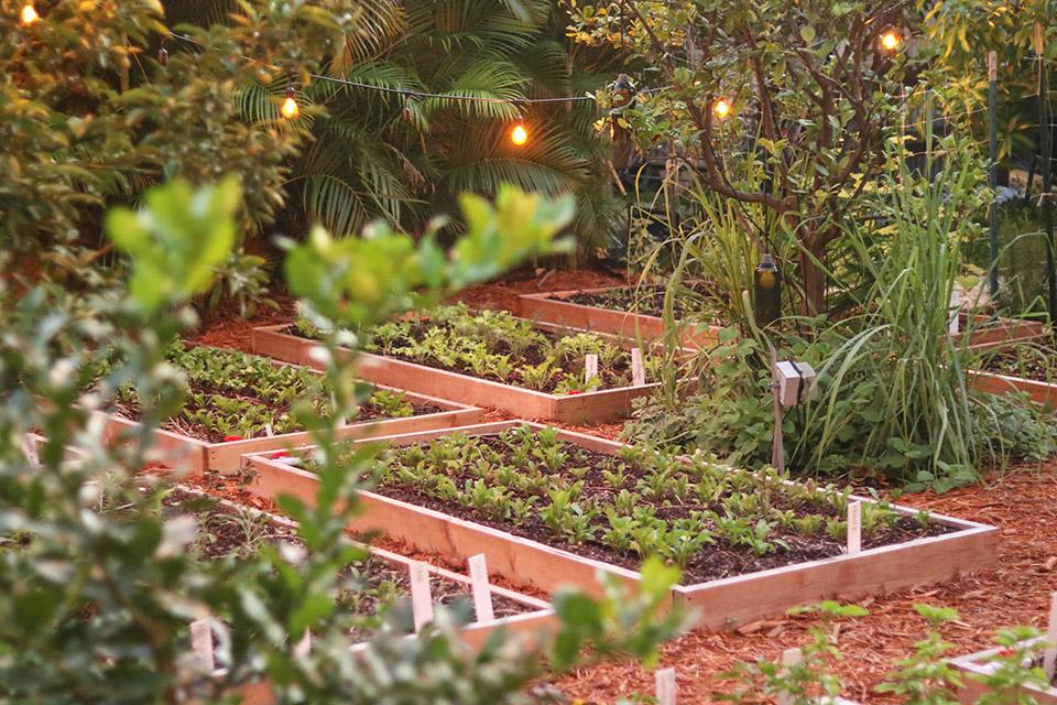 Canon 50mm f1.8 Lens – Freehand Garden