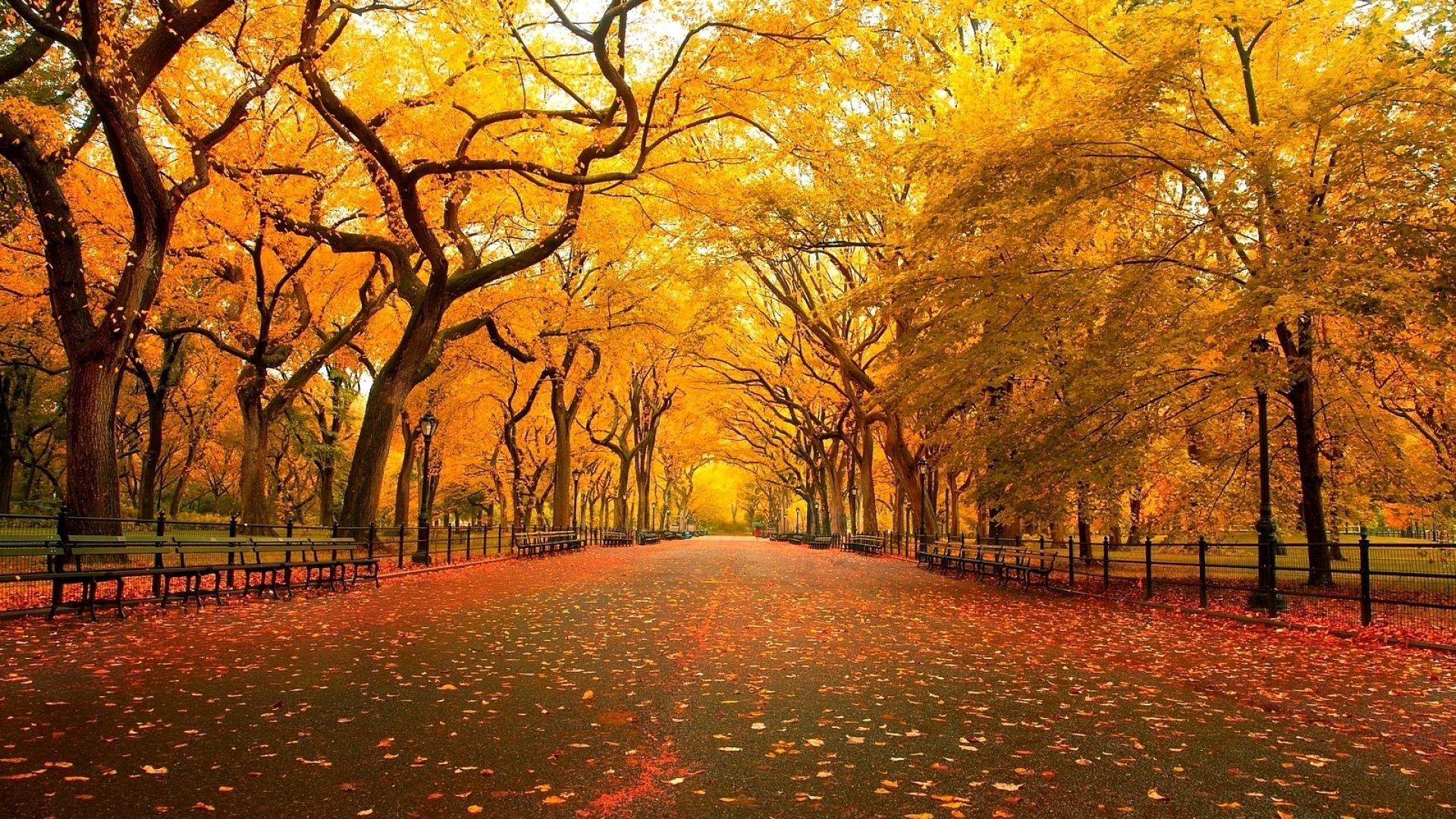 American Elm – beautiful tree