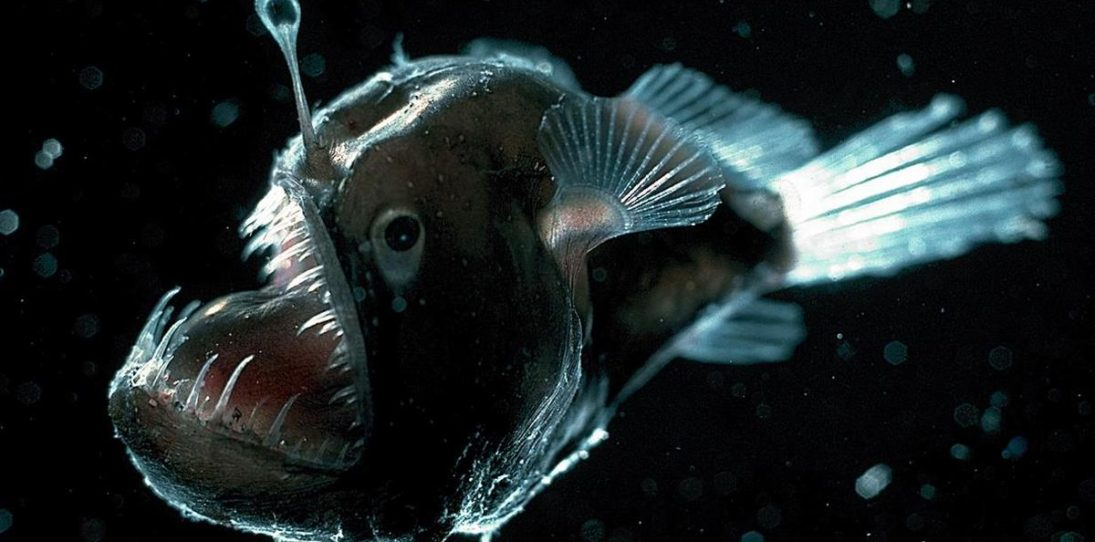 What Lies Beneath: 17 Awesome Undersea Animals