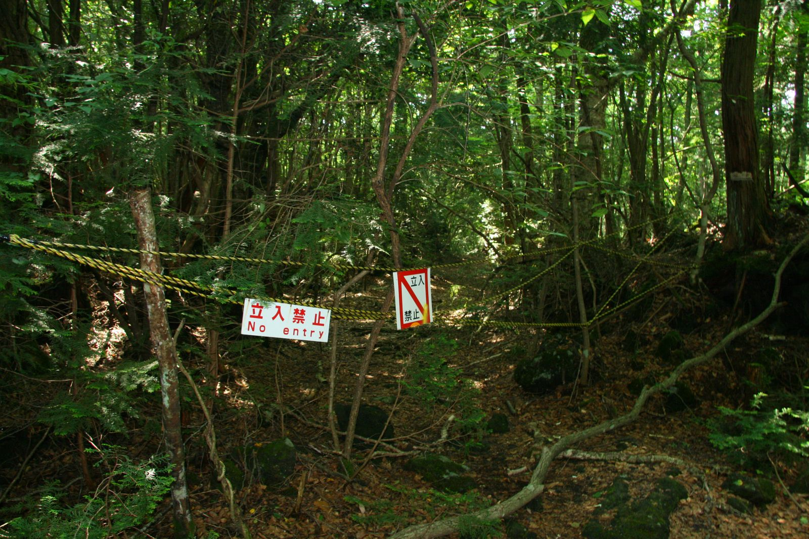 Aokigahara Suicide Forest – haunted place