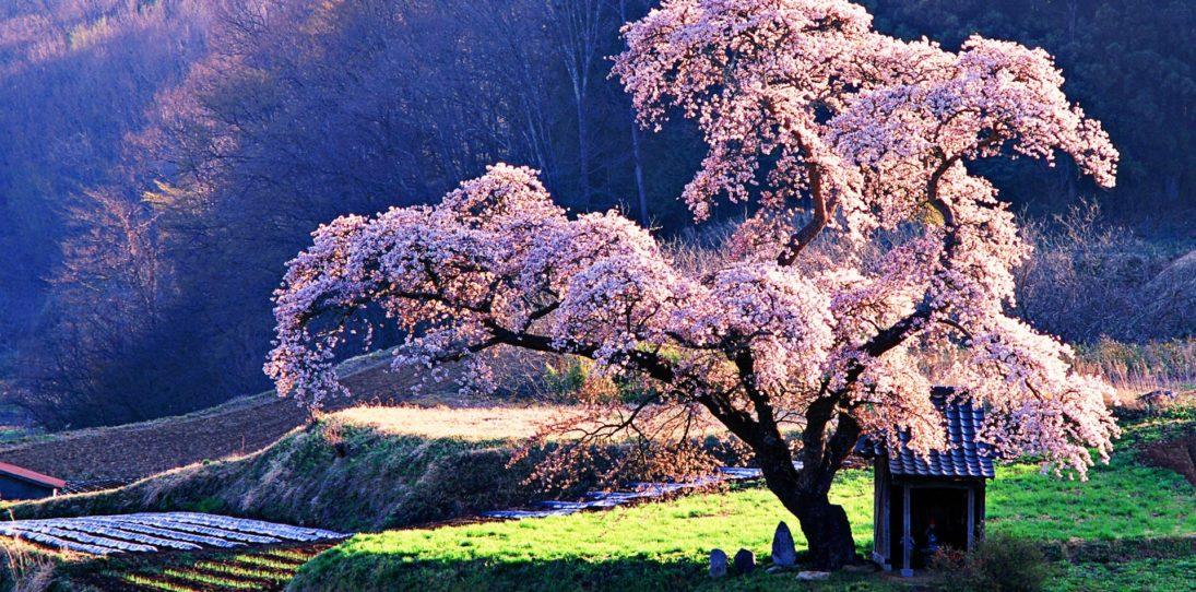 Mystical Sentinels: World's Most Beautiful Trees