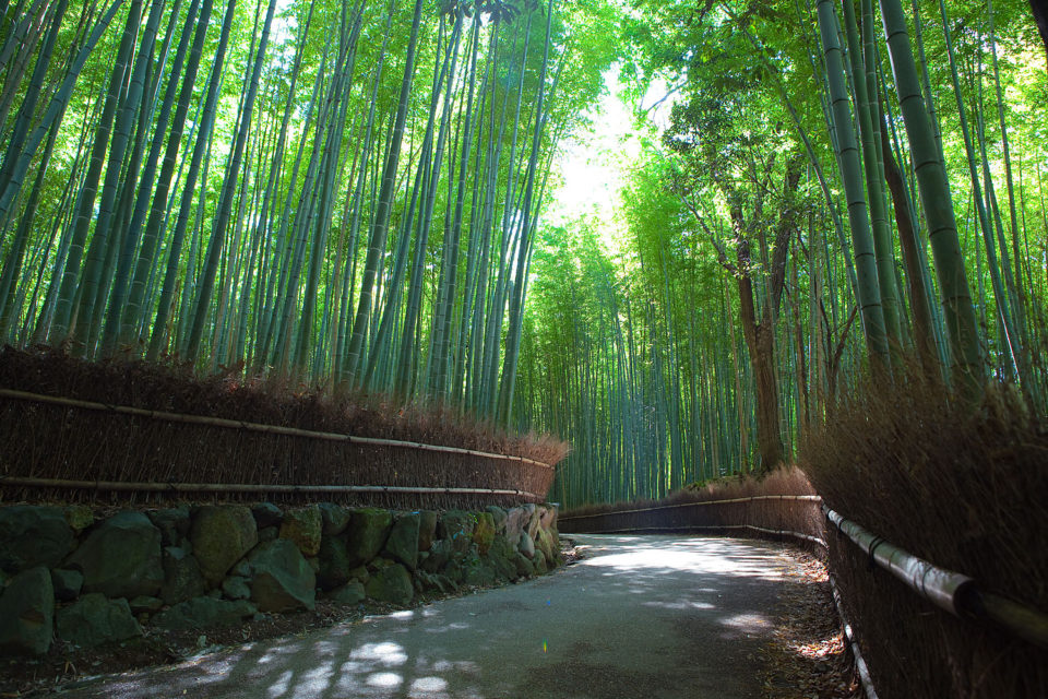 Sagano Bamboo - Bamboo Forest, Arashiyama, Japan