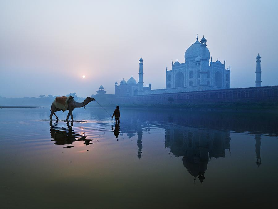 Man and camel on river Yamuna, near the Taj Mahal