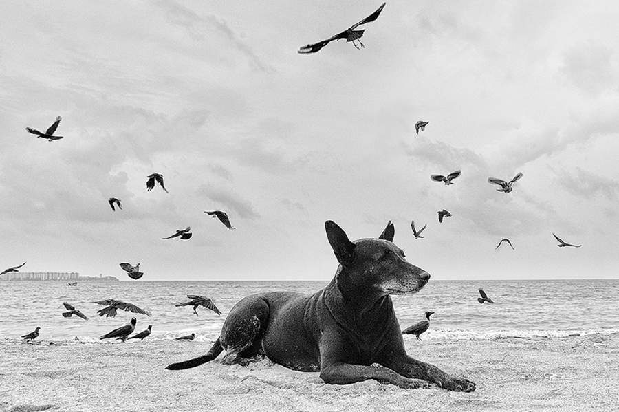 Indian dog, on the beach