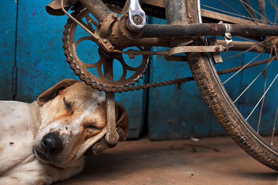 Indian dog sleeping on a bike pedal