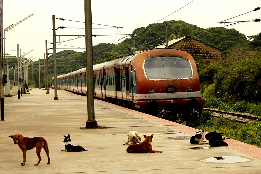 Stray dogs on the Indian railways