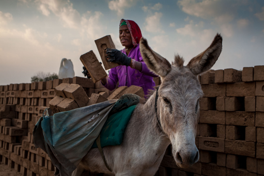 Donkey at a brick kiln in Gujarat, India (By Crispin Hughes)