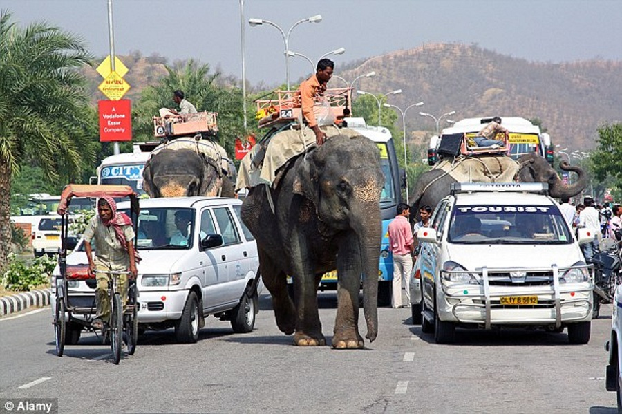elephants-road-india