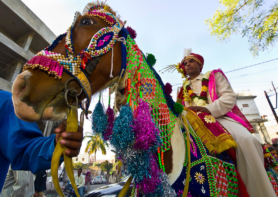horse-bridegroom-india
