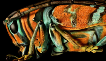 Macro Photography By Levon Biss