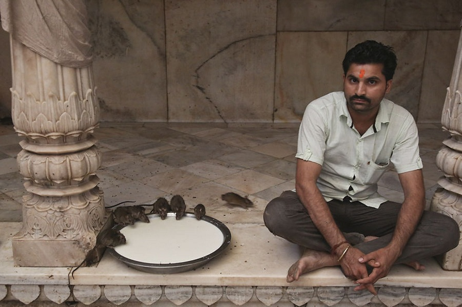 Karni Mata: Rats Temple In India
