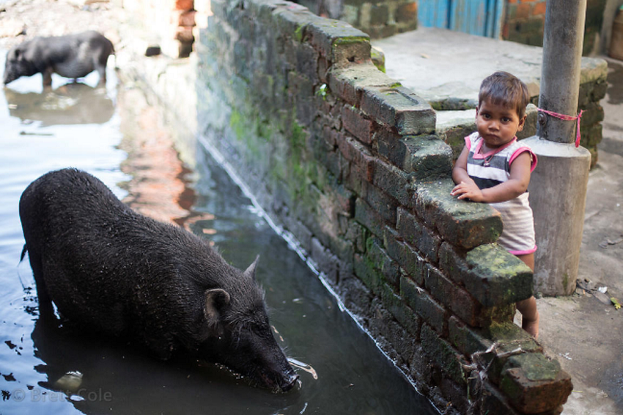 """Toddler and large pig in monsoon flood waters, Salkia, Howrah, India"". By Brett Cole"