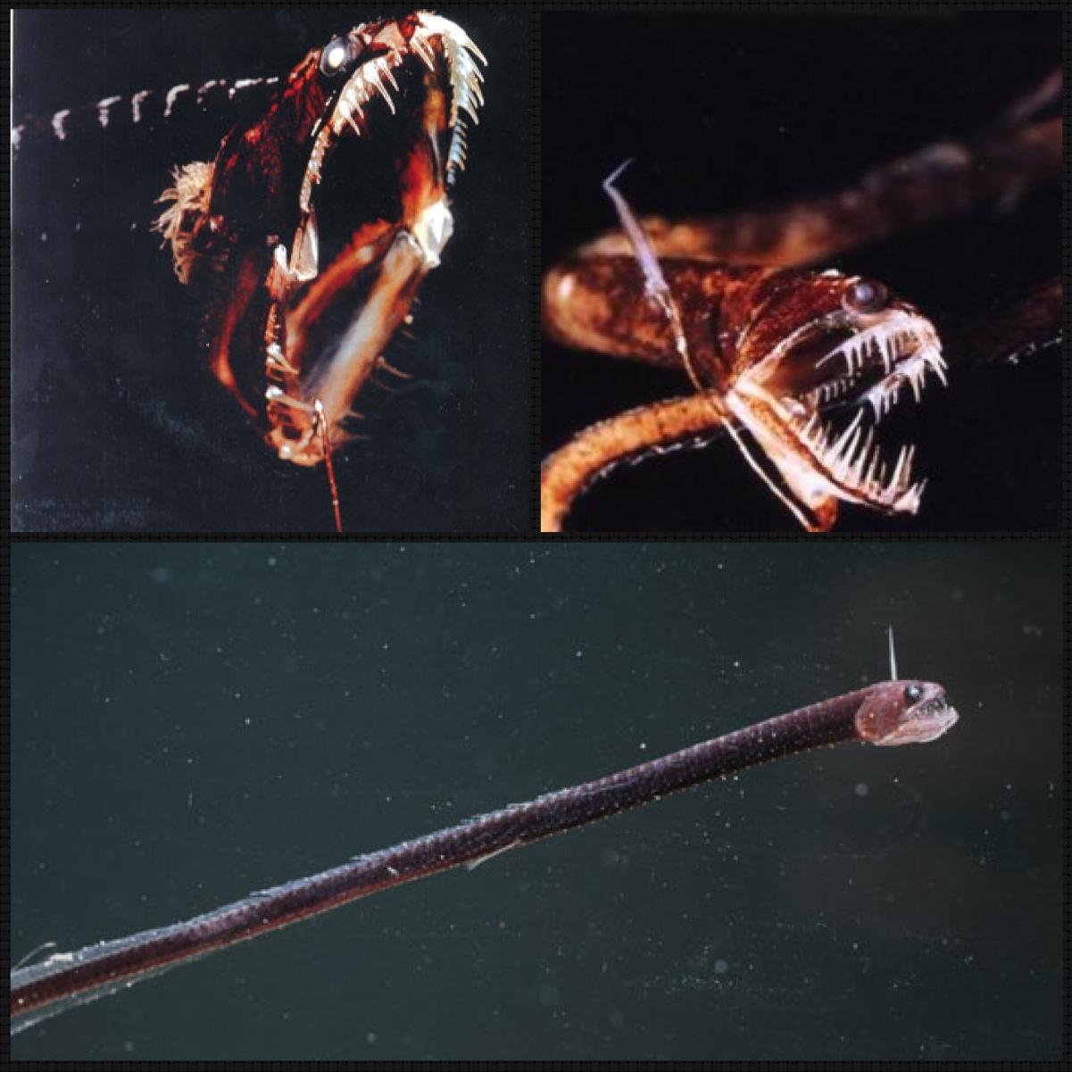 saulomaicol.tumblr.com – undersea animal