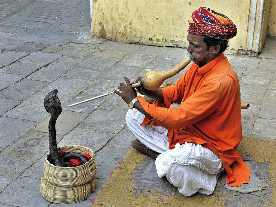 snake charming india the coolist The Jungle Book: Story Of Incredible India, in Pictures