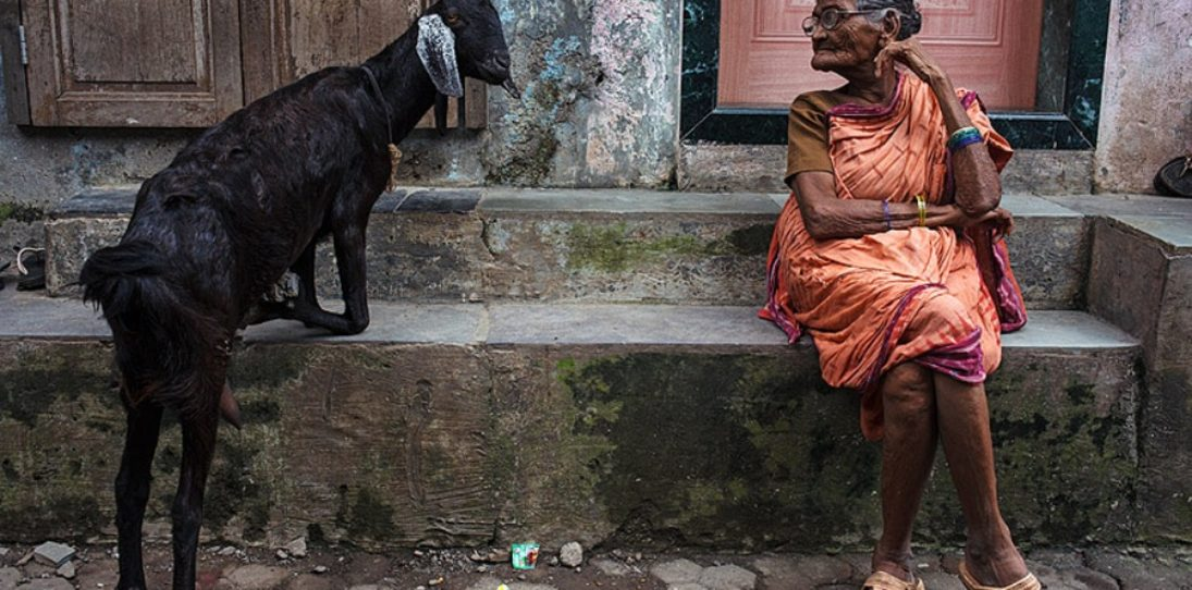 The Jungle Book: Story Of Incredible India, in Pictures